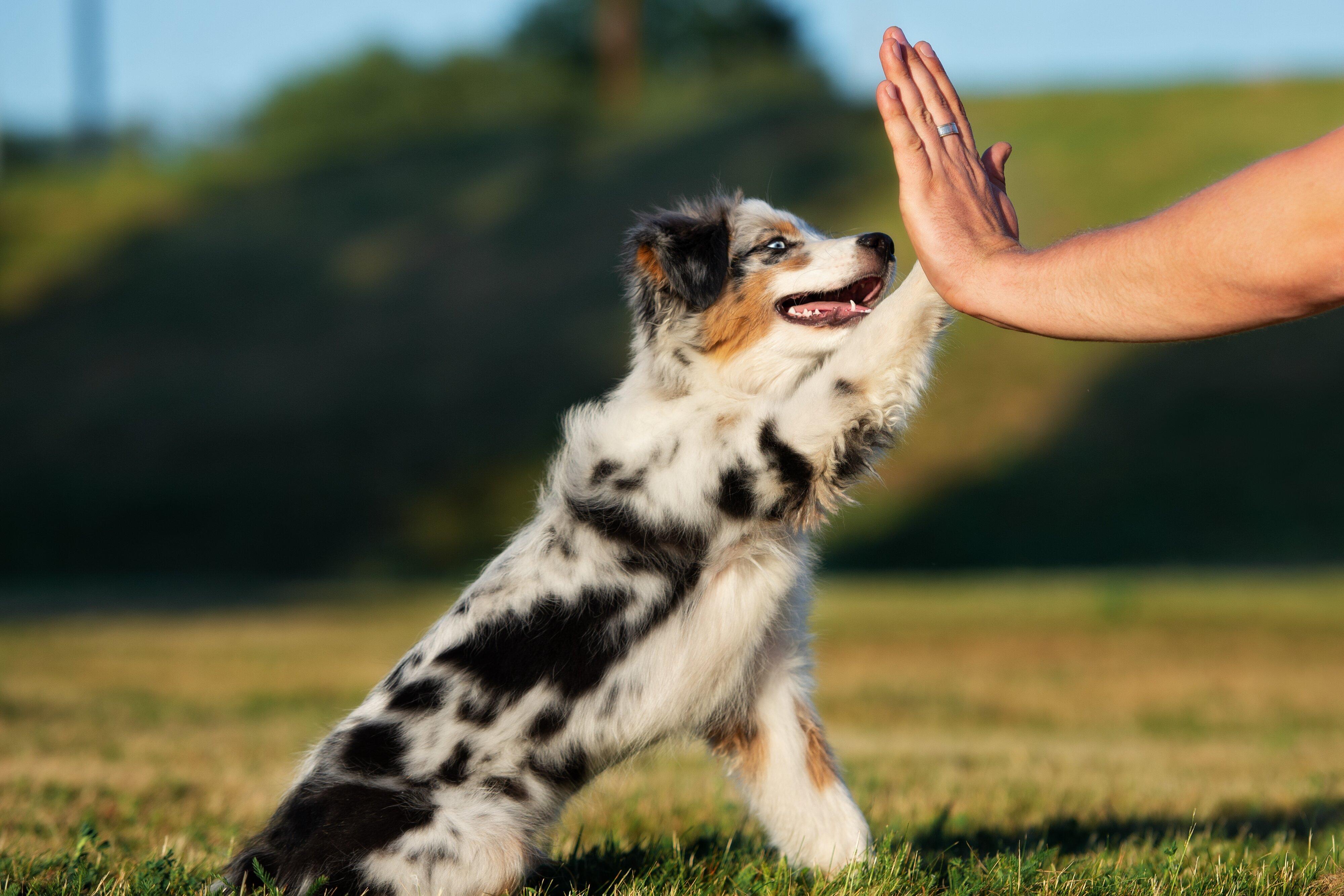 7 Por Medium Sized Dog Breeds
