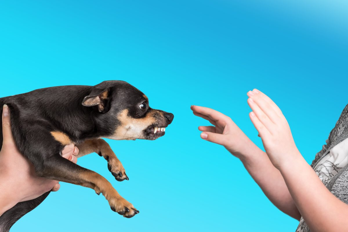 What To Do When Your Puppy Growls At You