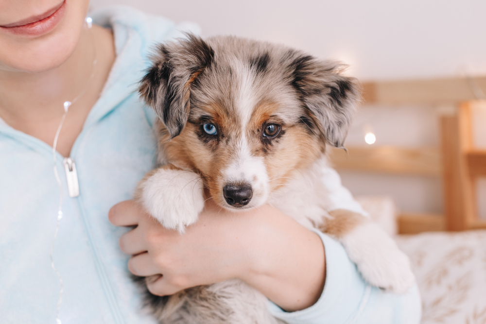 Top Things You Need to Know Before Buying a Puppy