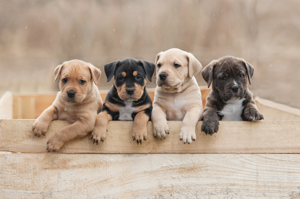 5 Tips for Choosing Your New Puppy